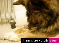 Hamsters and Dogs.  What do they have in common?