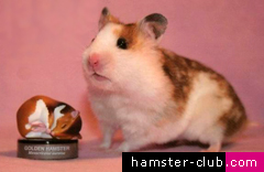 Hamster Shows - Showing your hamster