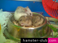 A Hamster's Diet