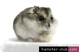 Hamster-Club featured in 'The Malta Independent'