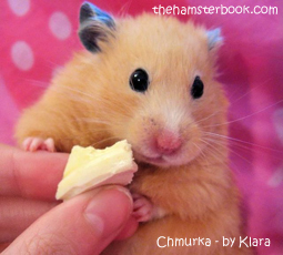 Hamster Interview