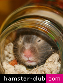 hamster potty / hamster jar