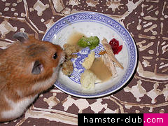 Chocolate should never be given to hamsters!