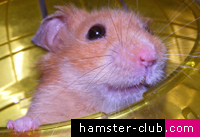 Hamster Club on radio RTK