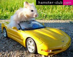 Traveling by car with your Hamster