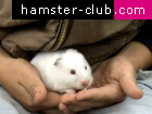How to handle a hamster