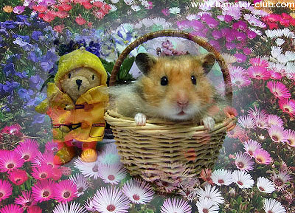Happy Mothers Day Hamster