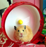 What to look for in a hamster wheel